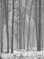 Snowstorm in Oak Openings-20131214-_C140216