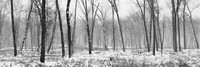 Snowstorm in Oak Openings-20131214-_C140235